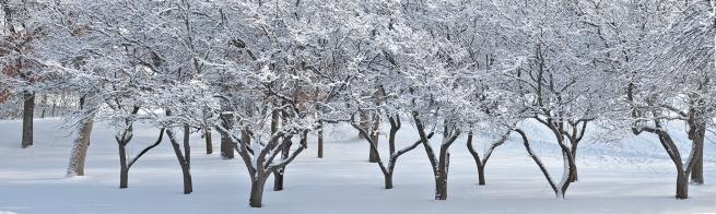 Como snow scene WEB